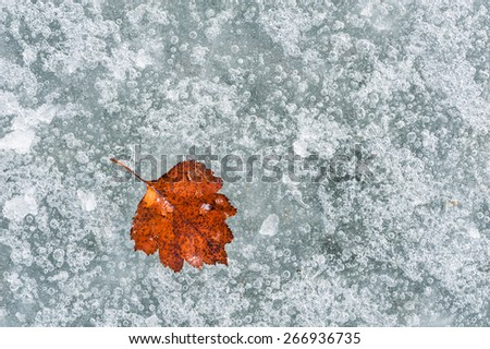 Autumn red leaf on the ice. Macro image with small depth of field - stock photo