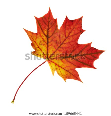Autumn red maple-leaf isolated over white background - stock photo