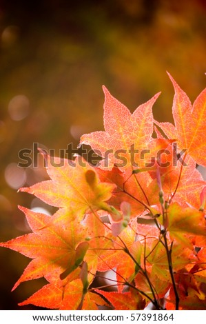 autumn red maple leaves floral background - stock photo