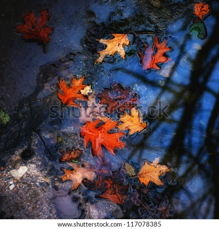 Autumn red oak leaves in the street puddle. - stock photo