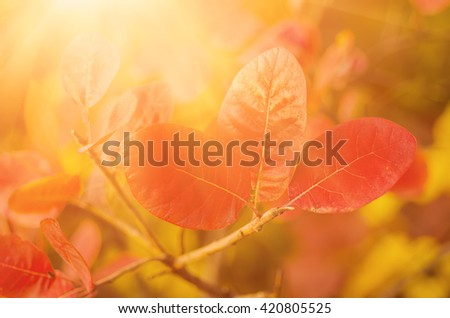 Autumn red tree branch with leaves, natural fall vivid sunny background - stock photo