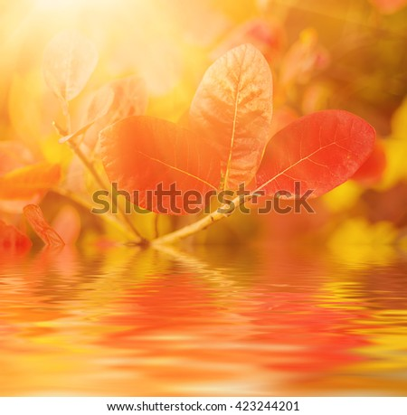 Autumn red tree branch with leaves, natural fall vivid sunny background with water reflection - stock photo
