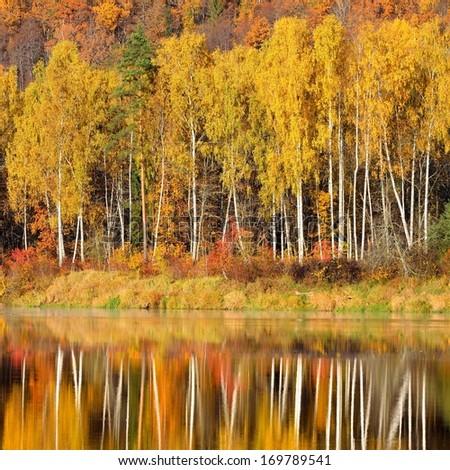 latvian autumn forest river - photo #18