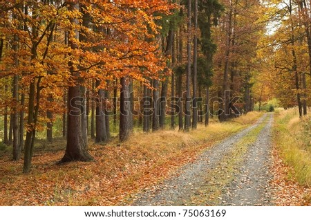 autumn road - stock photo