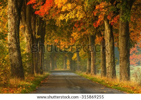 Autumn Road Alley Northern Poland./ Autumn Road Alley. - stock photo