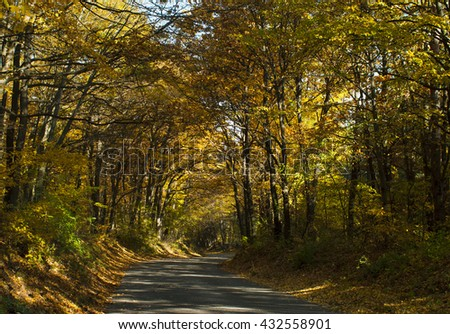 autumn road at forest - stock photo