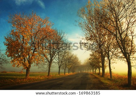 autumn road, foggy - stock photo