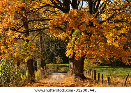 Autumn road in forest - stock photo