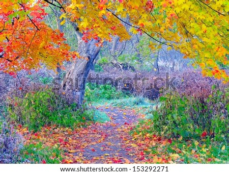 Autumn Road scenic in the fall of the year. - stock photo