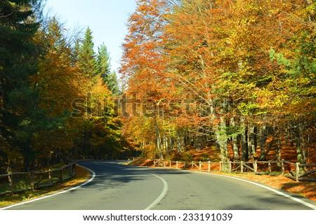 autumn road, transylvania - stock photo
