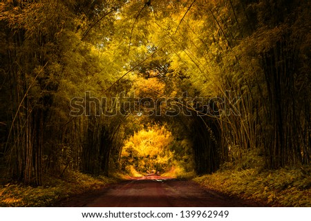 Autumn Road with Bamboo - stock photo