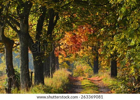 Autumn road with colorful trees - stock photo