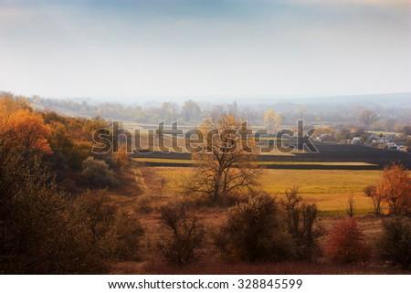 Autumn rural landscape in mist. village street near vegetable garden. Huge beautiful tree. Colors of autumn - stock photo
