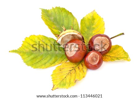 Autumn's chestnuts on white background