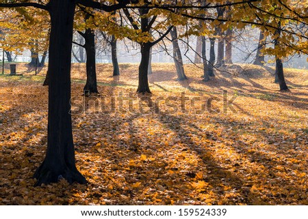 Autumn scene in a city park