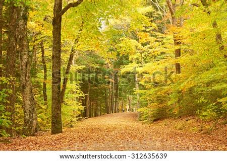 Autumn scene landscape somewhere in New England - stock photo
