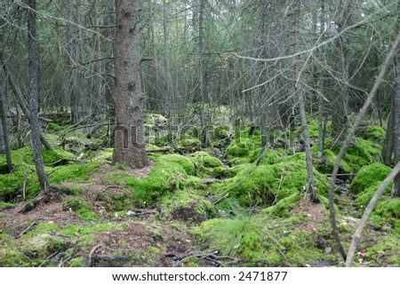 Autumn scene of a bog with moss growing on the ground - stock photo