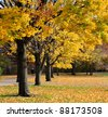 autumn scene of park near Fenway street, Boston, US. ground is covered with fallen maple leaves, trees turn golden and yellow. - stock photo