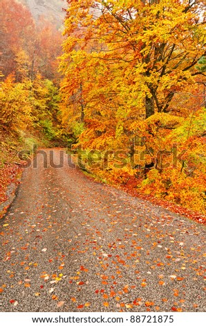 autumn scene of road with leaves under the trees