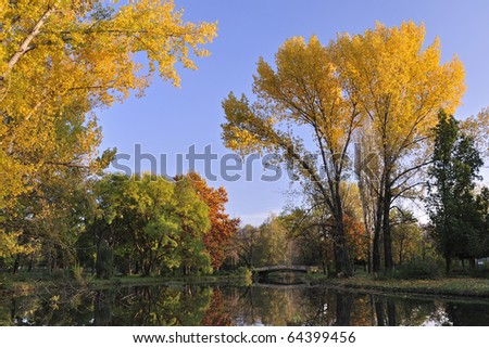 Autumn scene of trees with golden leafs