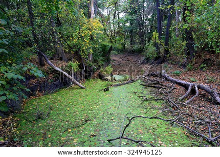 Autumn scene on bog in forest - stock photo