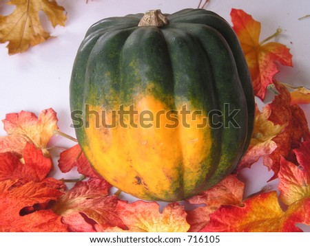 Autumn scene with an acorn squash and fall leaves. - stock photo
