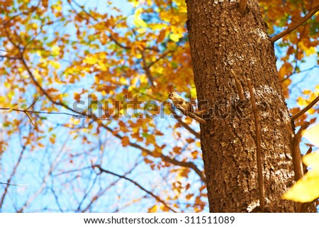 Autumn scene with chipmunk somewhere in New England - stock photo