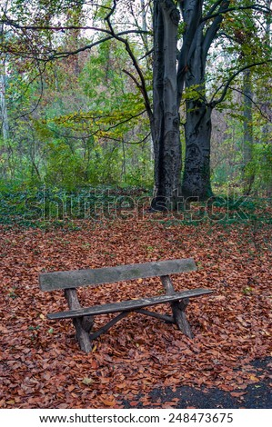 Autumn scene with empty bench in the park - stock photo
