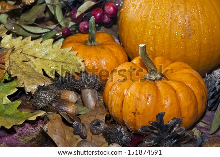 Autumn scene with leaves acrorns and pumpkin - stock photo