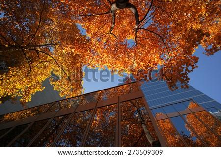 Autumn scene with orange trees in Vancouver, British Columbia, Canada - stock photo