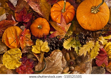 Autumn scene with pumpkins