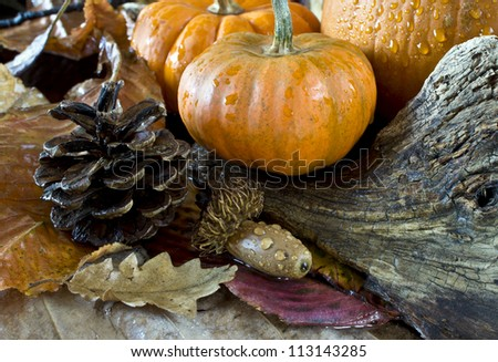 Autumn scene with pumpkins leaves and acorns - stock photo