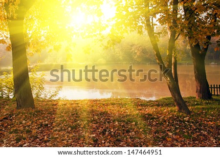 Autumn scene with ray of sunshine