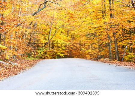 Autumn scene with road in forest - stock photo