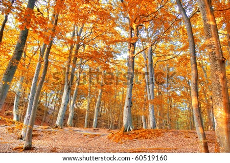 Autumn scenery. Beautiful gold fall in forest. - stock photo