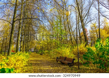 Autumn Scenery in City Park with Colorful Leaves and Empty Bench Along the Path near Tree and Bush in Sunlight