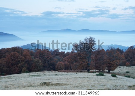 Autumn scenery in the mountains. Morning twilight. Fog in the valley. Beech forest on the slopes. Carpathians, Ukraine, Europe