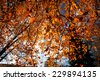 Autumn scenery in the park with red trees - stock photo