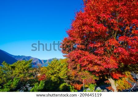 Autumn scenery of Japan - stock photo