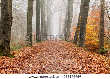 Autumn scenery of rural lane in the deciduous forest on a foggy morning - stock photo