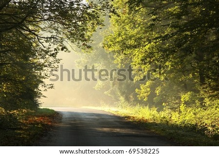 Autumn scenery of rural lane in the deciduous forest on a foggy morning. - stock photo