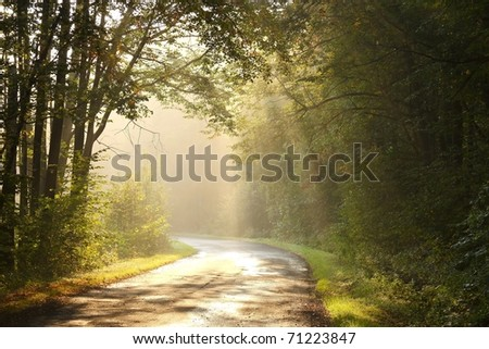Autumn scenery of rural lane in the deciduous forest on a foggy morning.