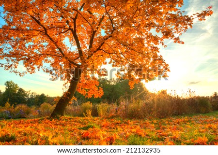 Autumn scenery with dry leaves and sunshine - stock photo