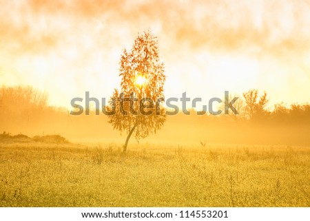 Autumn scenery with morning mist at the dawn - stock photo