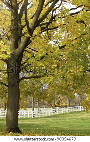 Autumn scenic on a horse farm in northern Illinois: Leaves of maple tree changing color over paddock on public horse farm in Warrenville, Illinois, USA, at end of October - stock photo