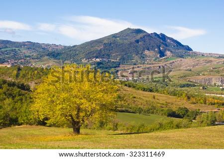 Autumn season in Emilia-Romagna, Italy. Lonely beautiful autumn tree. Autumn Landscape. - stock photo