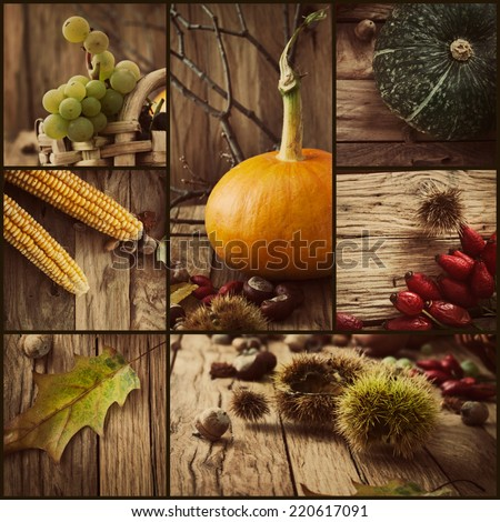 Autumn series. Collage of seasonal autumn fruit. Fall leaves, pumpkins, grapes and acorns on old oak wood. - stock photo