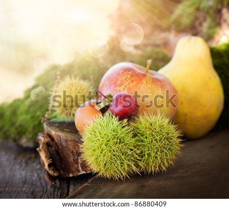 Autumn series. Nature background made of autumn fruit in the forest and beautiful sunlight in the back. Chestnut, vine leaf, wild apple, quince and apples. - stock photo