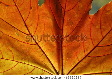 Autumn sheet