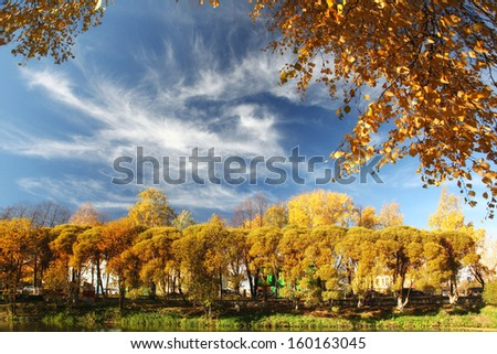 autumn sky branch - stock photo
